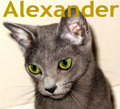 Alexander at 4 months old