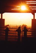 Sun Barn Photo By Randy Hendrix